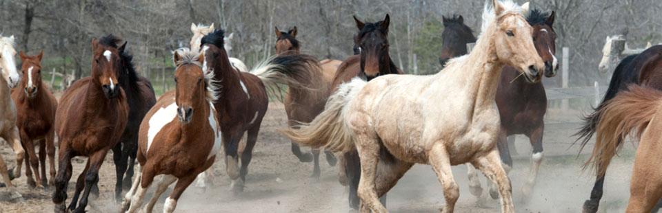 Horse Ranching & Safaris